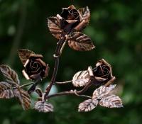 Rózsa csokor 3-db-os – ajándékötlet